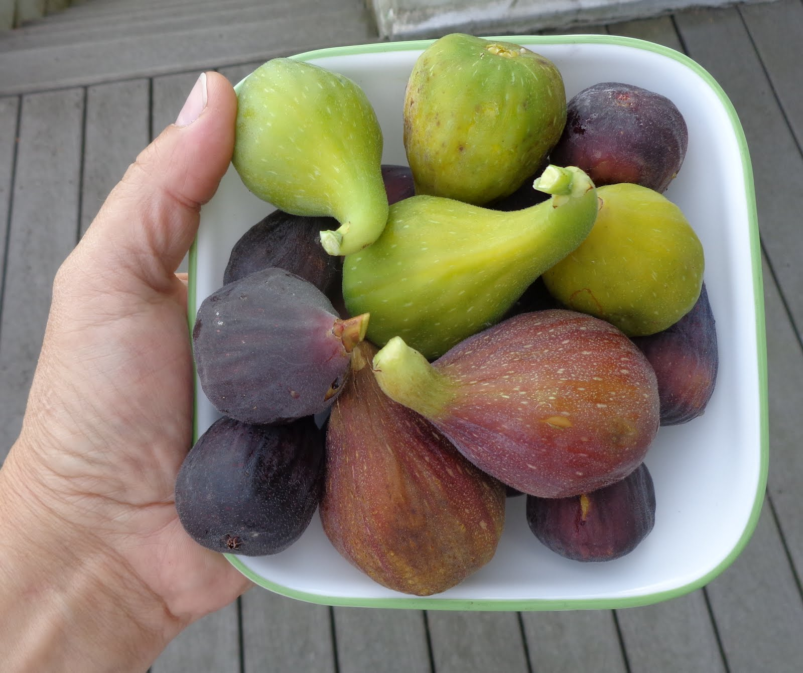 Growing Greener In The Pacific Northwest: Figs