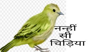 Little Bird Short Moral Story In Hindi