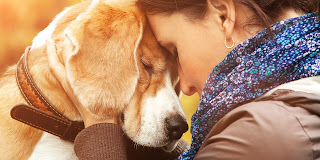 The Dog Can Help to Eliminate Sadness