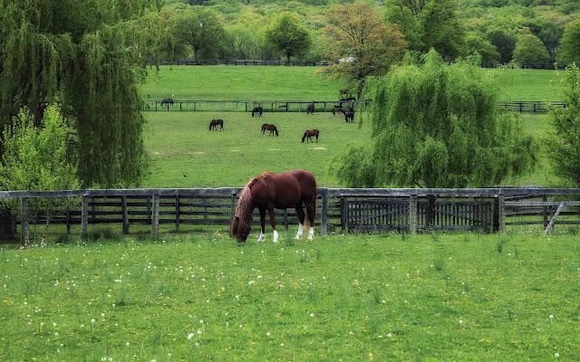 Bruin paard in het weiland