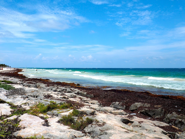 Seaweed on the rocks, and turquoise ocean waters by Tulum beach, Mexico