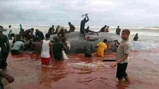 'If You Are A Whale Please Do Not Make The Mistake Of Washing Up On A Nigerian Beach, You Will Be Hacked To Pieces' - Femi Fani-Kayode