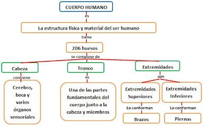 Esquema del Cuerpo Humano hecho por Jesus Gómez