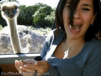9. Ostriches are the most terrible birds in the world.