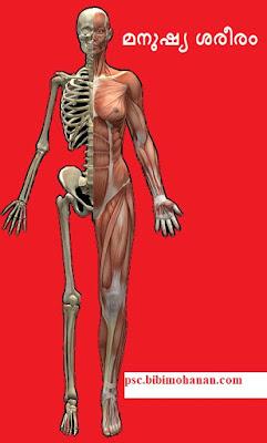 മനുഷ്യ ശരീരം ചോദ്യോത്തരങ്ങൾ-Human Body-LDC, LGS  Kerala PSC Thulasi