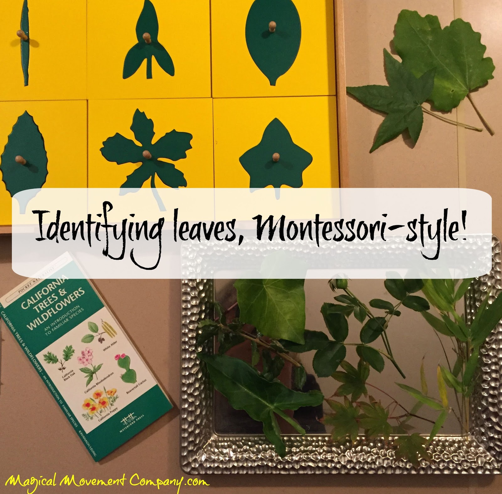 Montessori Botany Cabinet Leaf Shapes Cabinets Matttroy