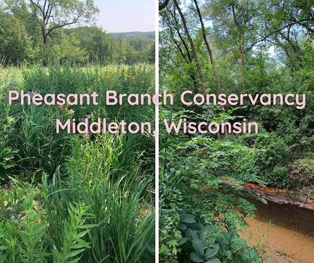 Trail Traipsing Exploring Creek Meanders, Brilliant Wildflowers and Majestic Woodlands at Pheasant Branch Conservancy