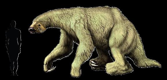 bicho-preguiça-gigante-na-amazonia