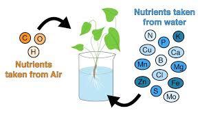 Hydroponic Farming nutrients