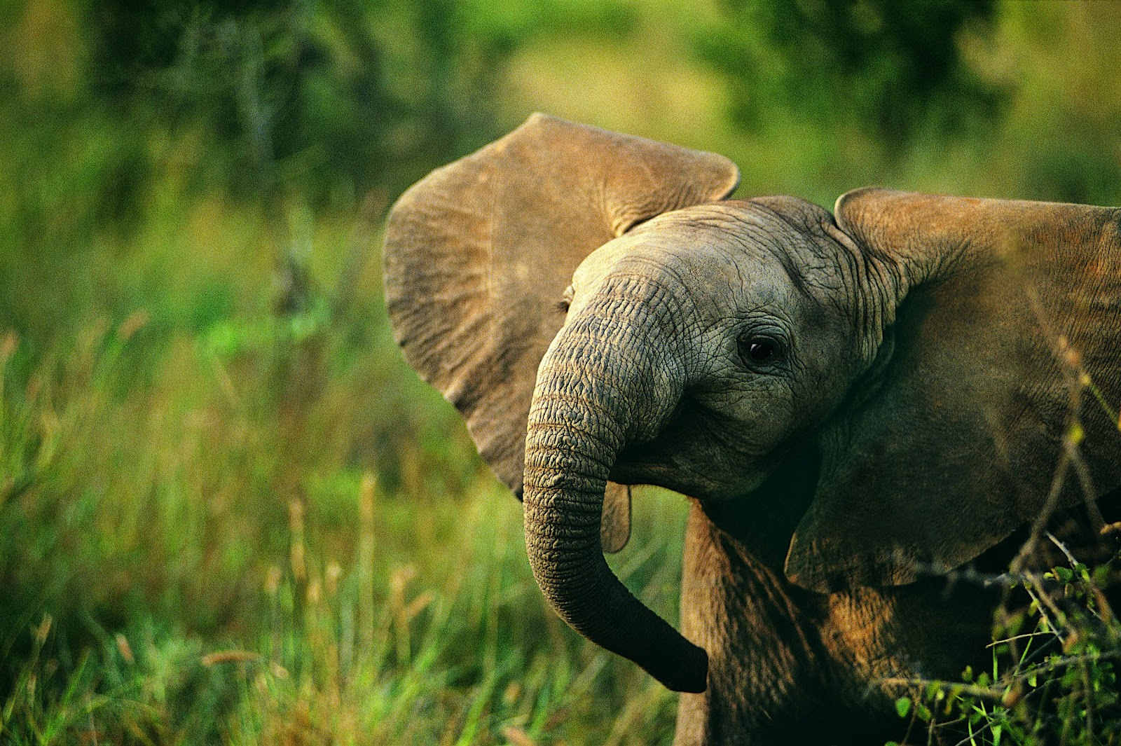 Beautiful Pictures OF Elephant In HD