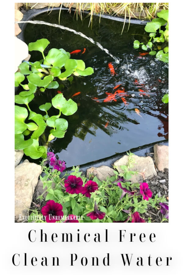 Chemical Free Clean Pond Water