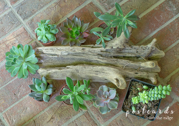 driftwood with little succulents on brick floor