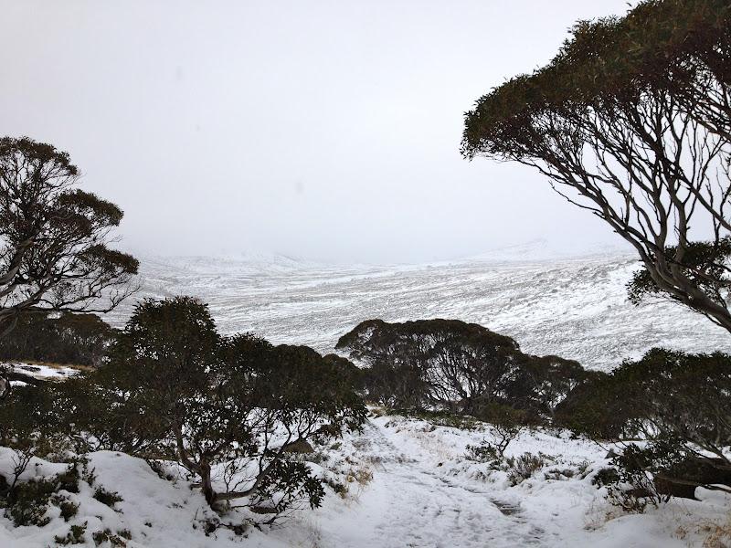 towards the snowy - photo #9