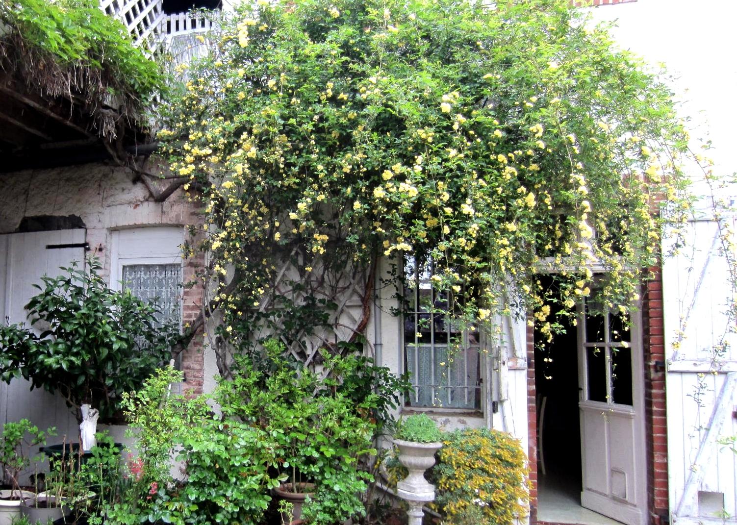 Mon Jardin En Avril matin lumineux: jardin de fin d'avril
