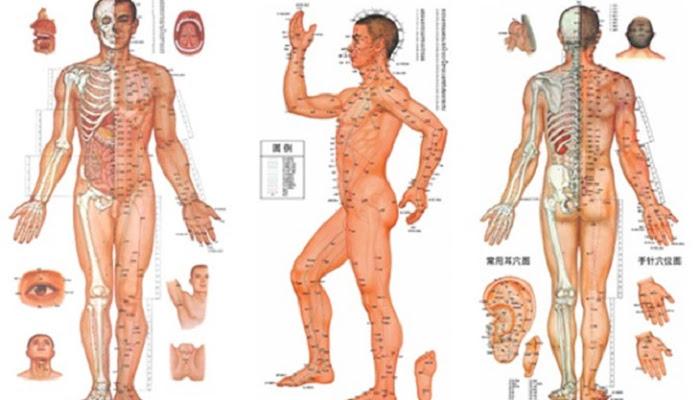Kinh lạc là gì? Cấu tạo chính và tác dụng đối với cơ thể
