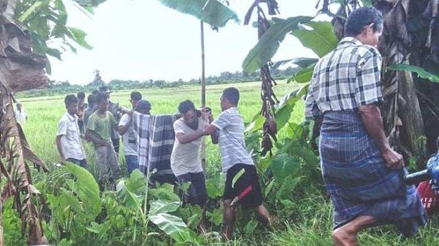 9 Petani di Demak Tersambar Petir Saat Panen Padi