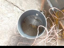 evil cat theft in Vietnam with cat traps