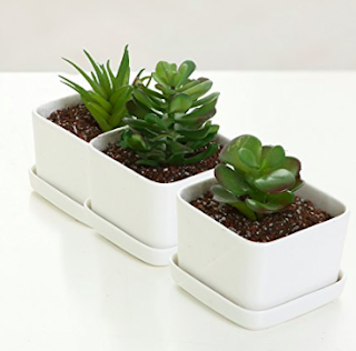Succulent or Cactus Set - BFF gift guide under $50. Birthday gift guide under $50. Birthday presents under $50. Birthday gift guide. | brazenandbrunette.com
