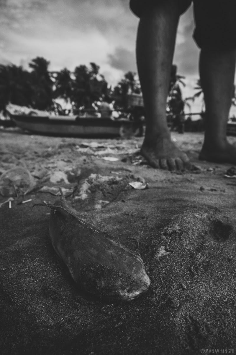 Freshly Caught Fish at Fisherman Area near Le Pondy Beach Resort, Pondicherry - 29-Oct-2019