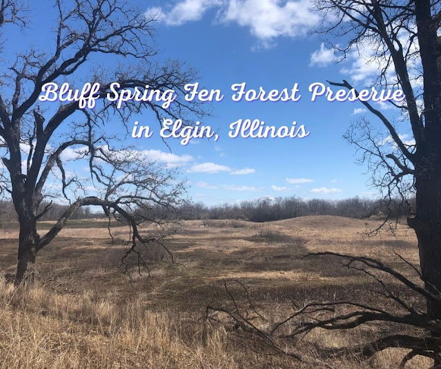 Admiring the View at Bluff Spring Fen Forest Preserve in Elgin, Illinois
