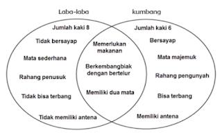 diagram persamaan dan perbedaan antara laba-laba dan kumbang www.simplenews.me