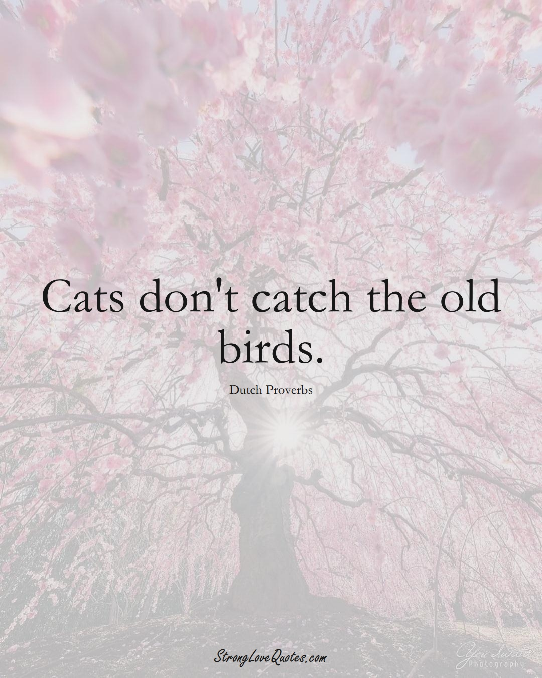 Cats don't catch the old birds. (Dutch Sayings);  #EuropeanSayings