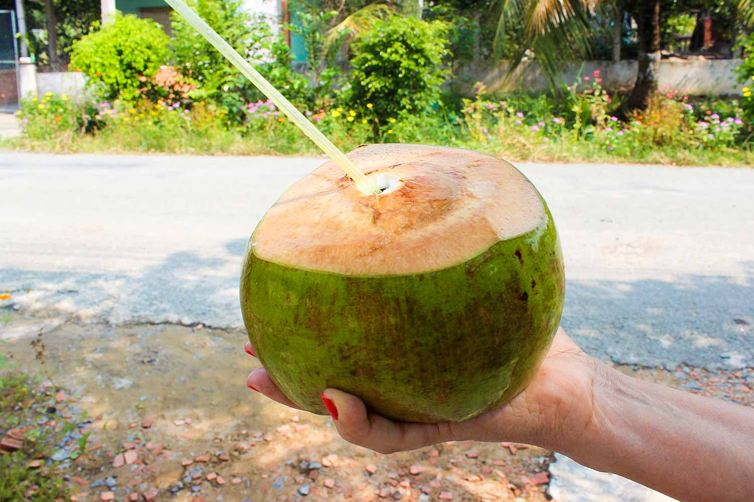 fresh coconut vietnam