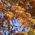 Dobrzyca jesienią