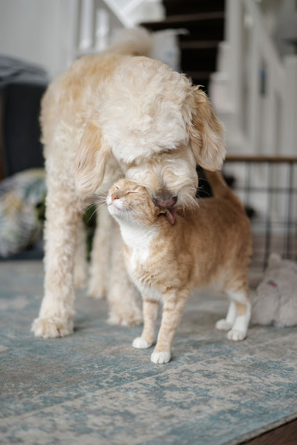 Companion Animal Psychology turns 8; a dog and cat nuzzle each other