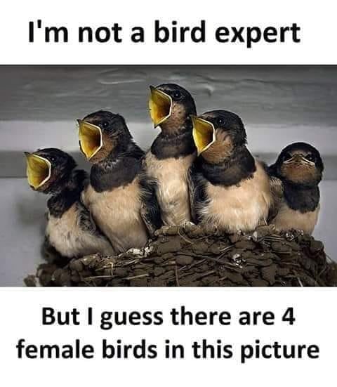 I'm not a bird expert, but I guess there are 4 female birds in this pictures