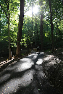 A forest with sun coming through the trees.