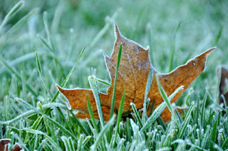 How to Winterizing Your Lawns