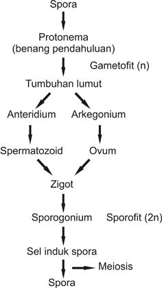 image: Reproduksi Bryophyta dan Pteridophyta