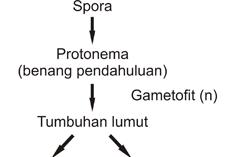 Reproduksi Bryophyta dan Pteridophyta