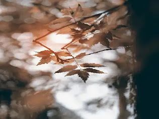 Neem Tree Benefits in  hindi