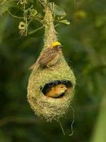 Pájaro Baya