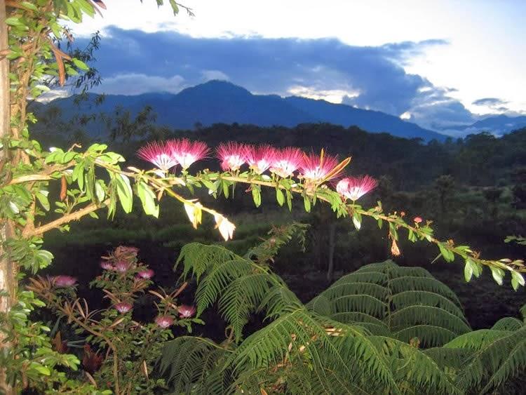 Hosterías en el oriente ecuatoriano – Huasquila Amazon Lodge