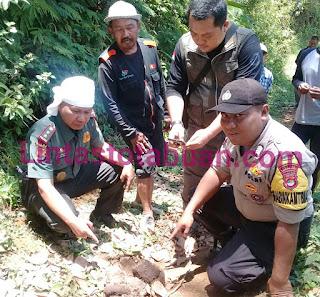 Seekor Gajah Liar Memasuki Kebun Warga di Pekon Padang Cahya Balik Bukit Lampung Barat