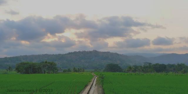 Panorama sawah Ndaleman Nanggulan