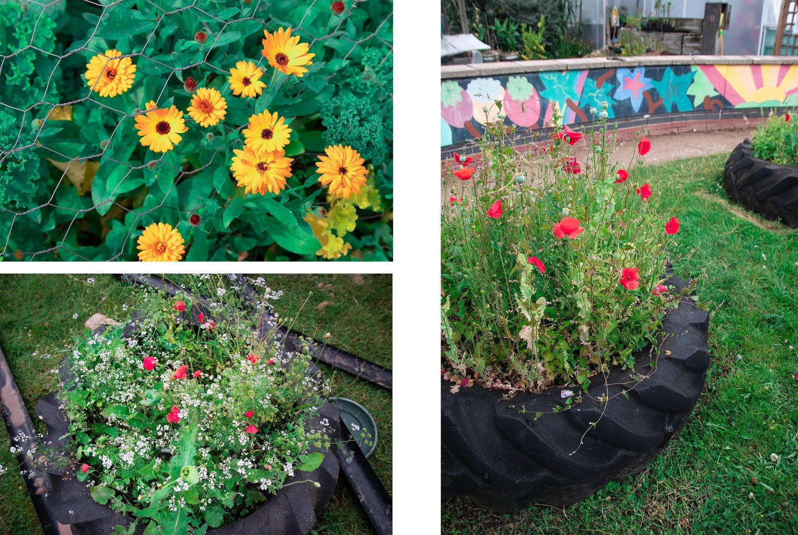 The Quirky Queer: Community Gardens - Tranquility in the City