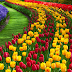 Inilah Tanaman Hias Bunga Paling Bagus dan Indah