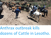 https://sciencythoughts.blogspot.com/2019/06/anthrax-outbreak-kills-dozens-of-cattle.html