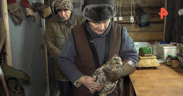 Экс-полицейский лечит хищных птиц и выпускает на волю на Куршской Косе