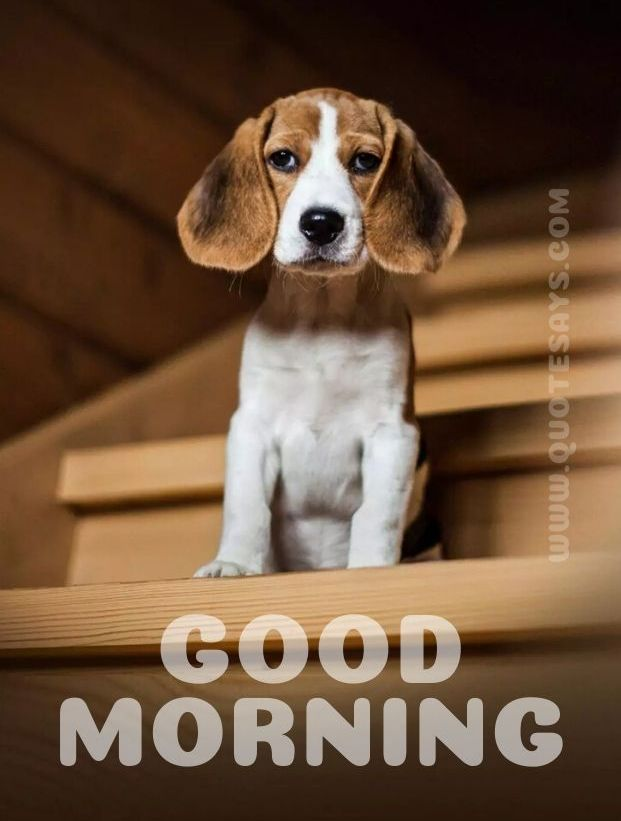 Beautiful Good Morning Puppy