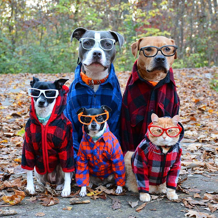 32 Animals That Look Like They're About To Drop The Hottest Albums Of The Year - Fall Out Boys
