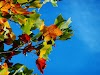 100+ best fall equinox hd and 3d quality images here - picsler