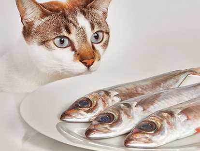 Ikan Mentah Sebagai Makanan Kucing Kuliah Anta