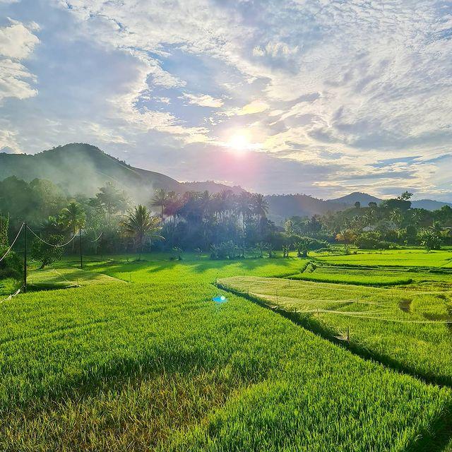 panorama sawah view payakumbuh