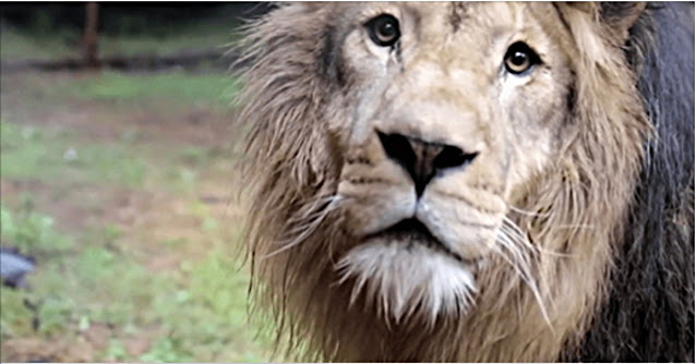 Эмоции животных, которые вышли на свободу из цирка…