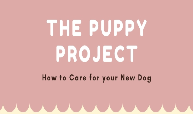 How to care for your New Dog #infographic